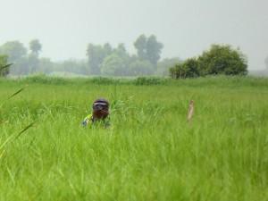 Tourisme solidaire Bénin latrines sèches - Vu
