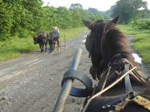 Tourisme solidaire Cuba - Transport à cheval