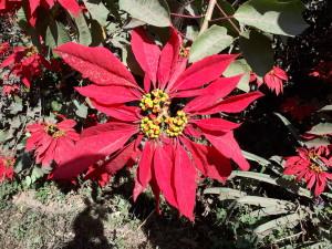 voyage équitable à Madagascar - la fleur de Madagascar