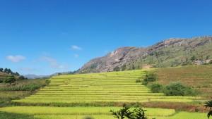 Voyage utile à Madagascar - Rizières