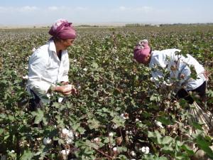 Voyage Solidaire Kirghizstan - récolte du coton