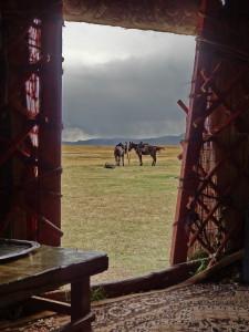 voyage solidaire au Kirghizstan - chevaux