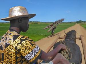 voyage solidaire à Madagascar - Char à zébu