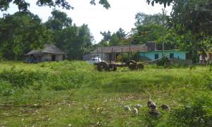 Tourisme solidaire Cuba - Finca Ancon