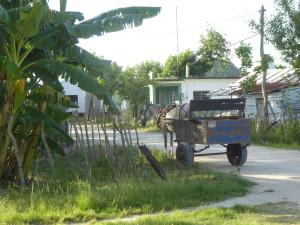 Voyage équitable Cuba - Ruelle de Palenque