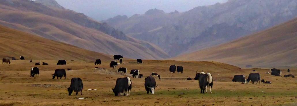 Voyage responsable Kirghizstan - solidarité
