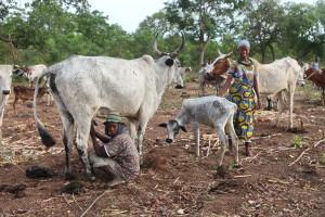 Tourisme solidaire Bénin - Peuhls