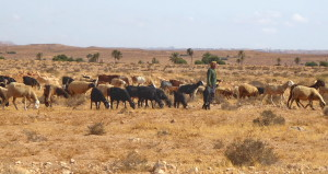 Tataouine - tourisme responsable Tunisie