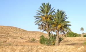 Voyage solidaire en Tunisie - Tourisme équitable