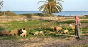 Voyage solidaire en Tunisie - Séjour responsable