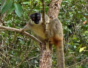 Programme et Prix - Voyage solidaire Madagascar